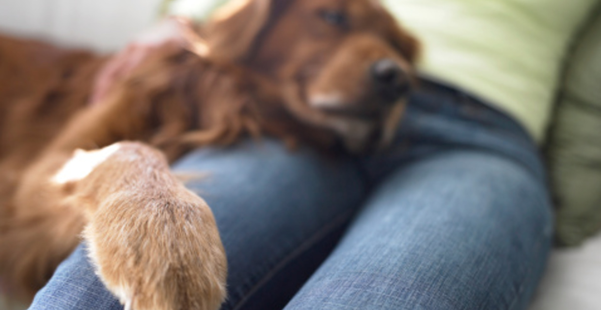 Dogs Who Love Unconditionally