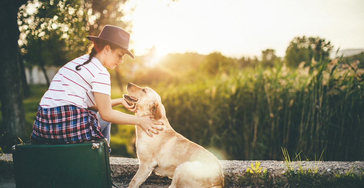 PAWS Act Provides Federal Protections for Survivors' Pets