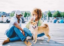 domestic violence and animal abuse